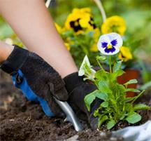 woman gardening gloves posies flowers gardening tools